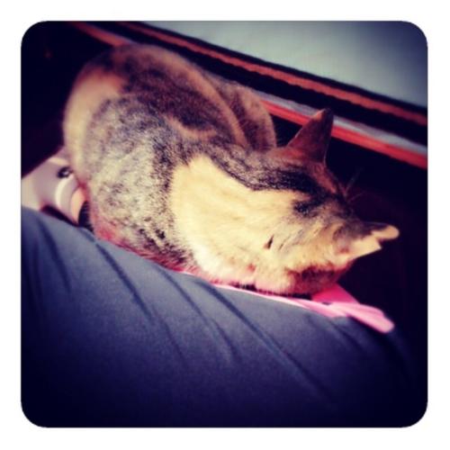 【フクラハギの上のネコ】