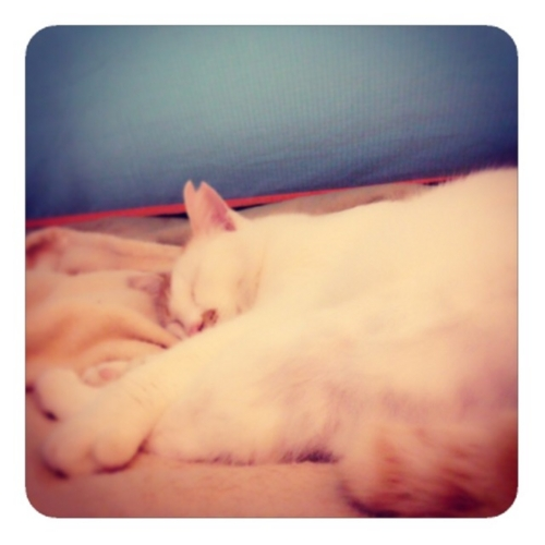【寝るネコ1】