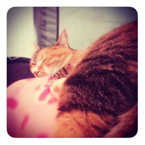 【寝るネコ2】