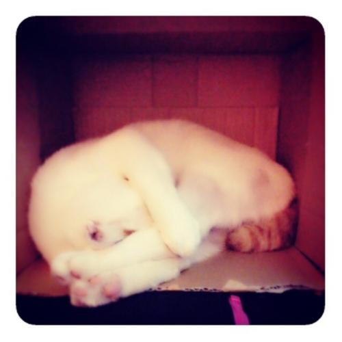 【ダンボールの中のネコ2】