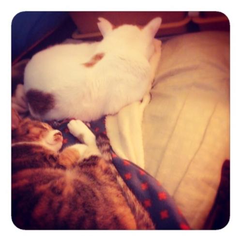 【寝るネコ】