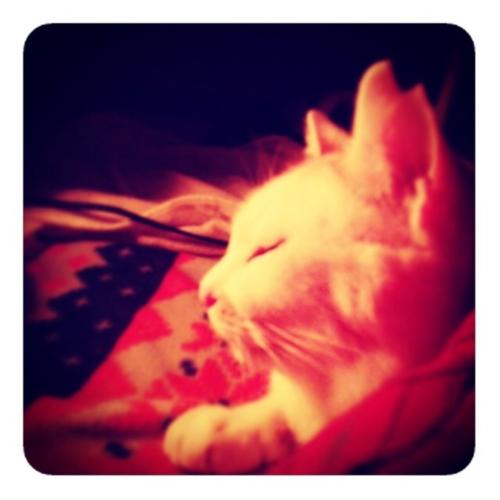 【ストーブの前でネコ】