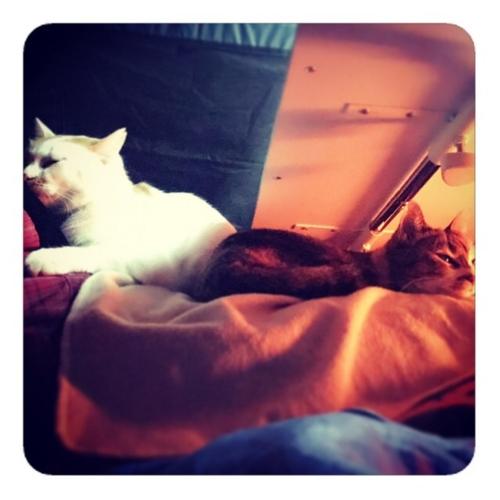 【屋根の下テントの中、座椅子の上テーブルの下、ヒトの上ネコ2匹1】