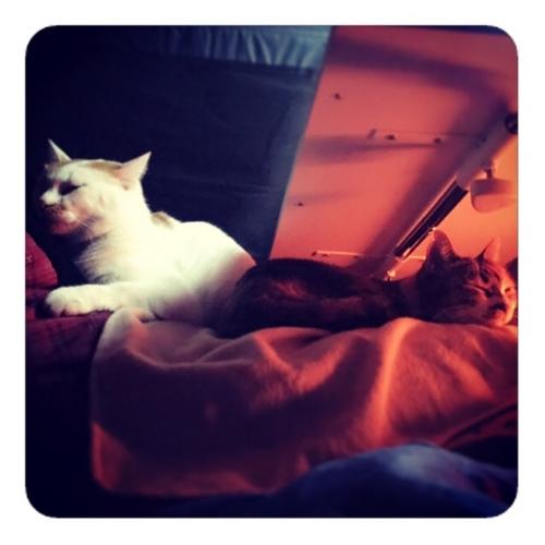 【屋根の下テントの中、座椅子の上テーブルの下、ヒトの上ネコ2匹2】