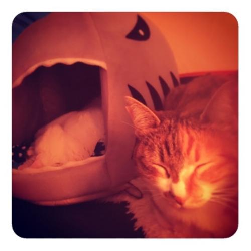 【ハウスの中にいるネコいないネコ1】