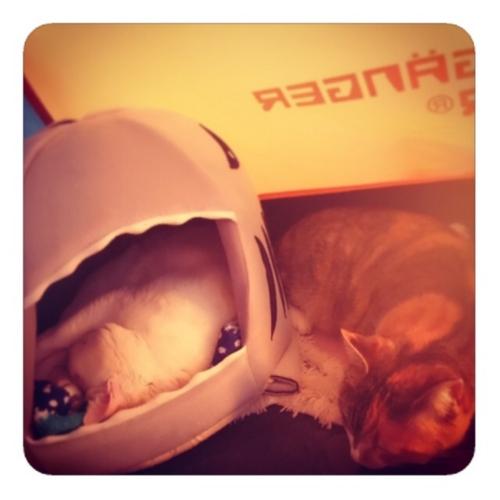 【ハウスの中にいるネコいないネコ2