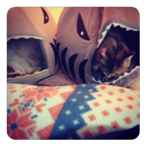 【サメ型ねこハウス1】