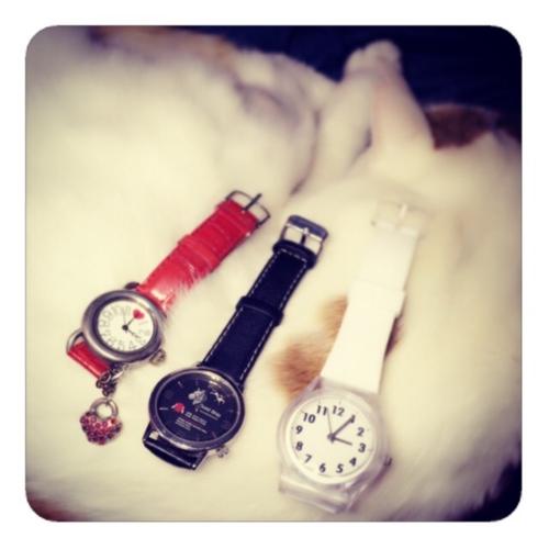 【にゃんこしゃんと腕時計】