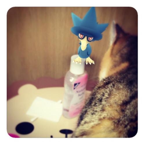 【ベビーオイル綿棒コットン猫】