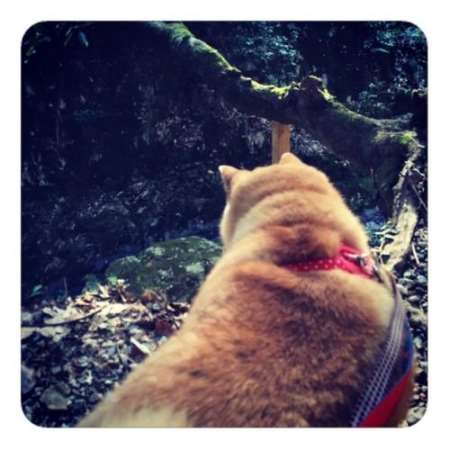 【犬散歩】