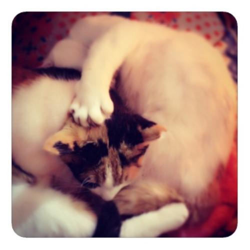 【猫グワシ】