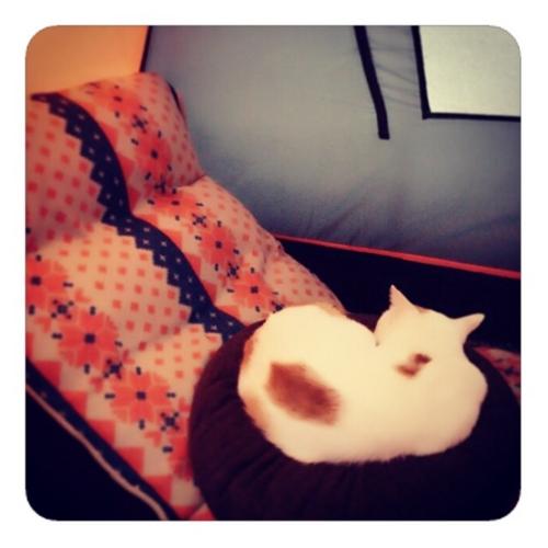 【座椅子の円座の猫】