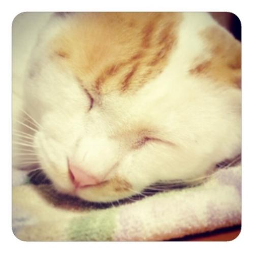 【私の猫のような斜め前髪は可愛い】