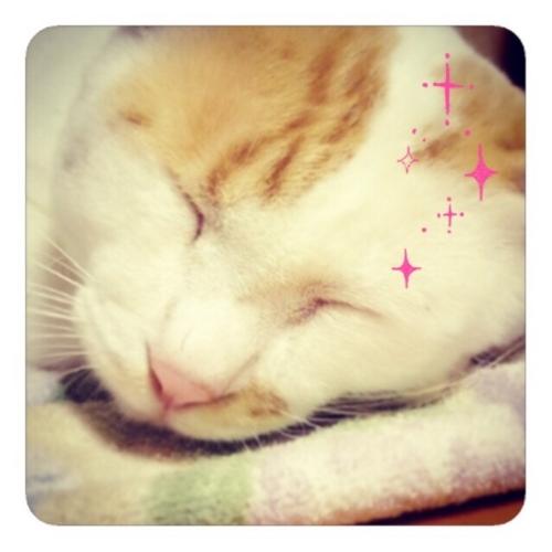 【私の猫の斜め前髪は可愛い】