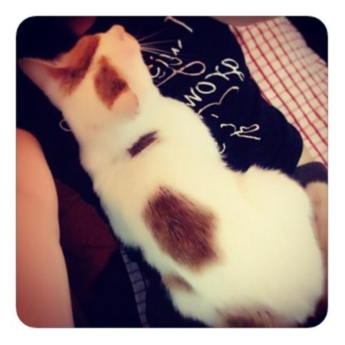 【猫と私】