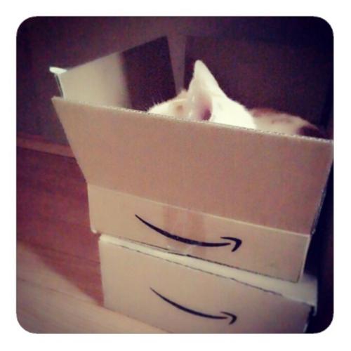 【アマゾンから届いた猫】