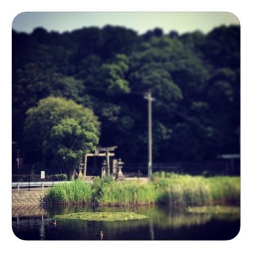 【空と森と池と鴨】