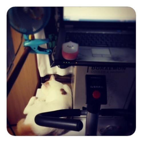 【雑なDIYスタンディングデスク+ネコねんね】