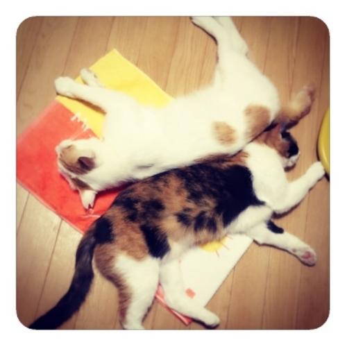 【猫の寝床】