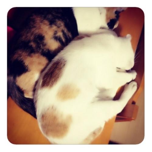 【猫1・2】
