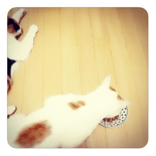 【食べる猫に、眠る猫】