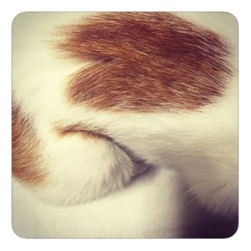 【パックマンのような寝癖のついた猫】