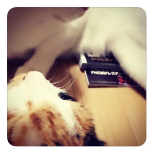 【『VOGUE JAPAN』をふところでぬくめてくれる猫】