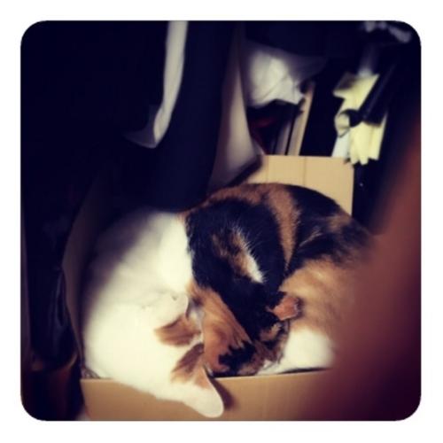 【クローゼットで眠る猫ふたり】