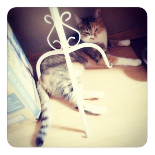 【トルソーのふもとでリラックスする猫一匹】