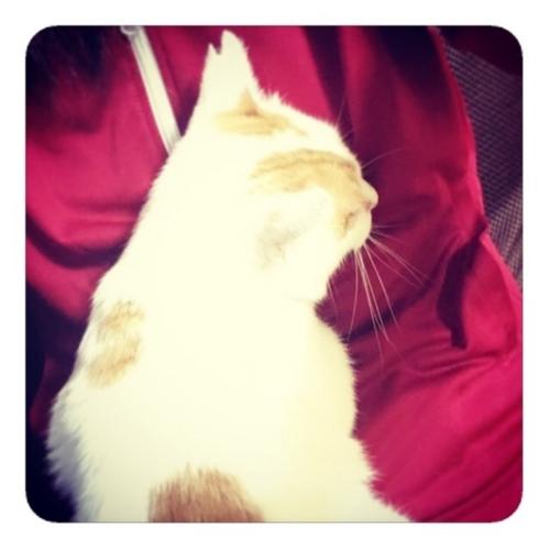 【座椅子の上の赤ジャージの私とその上の白い猫1/2】