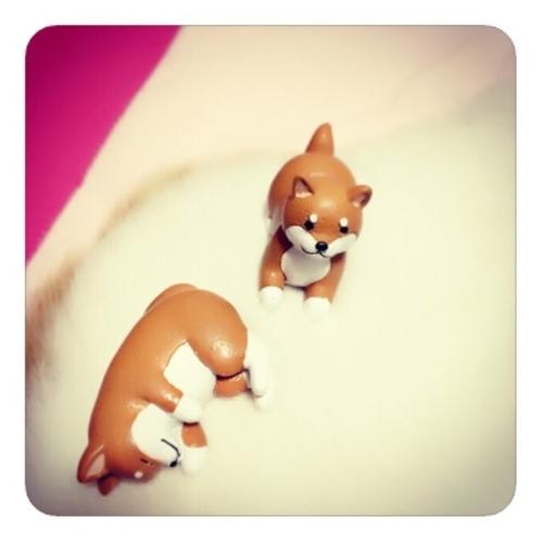 【「柴犬コロ/おひるね」&「柴犬コロ/ふせ」1/3】