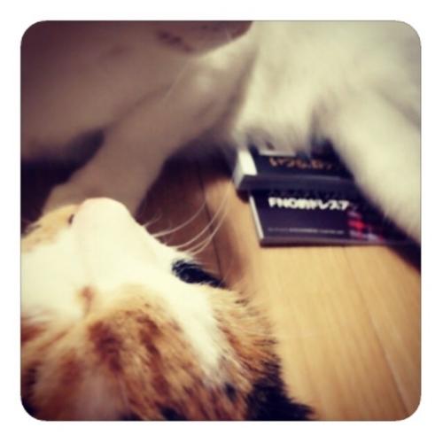 【猫の下敷き】