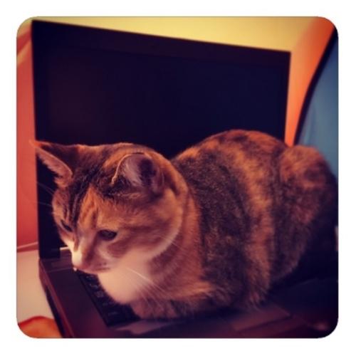 【キーボードの上の猫】