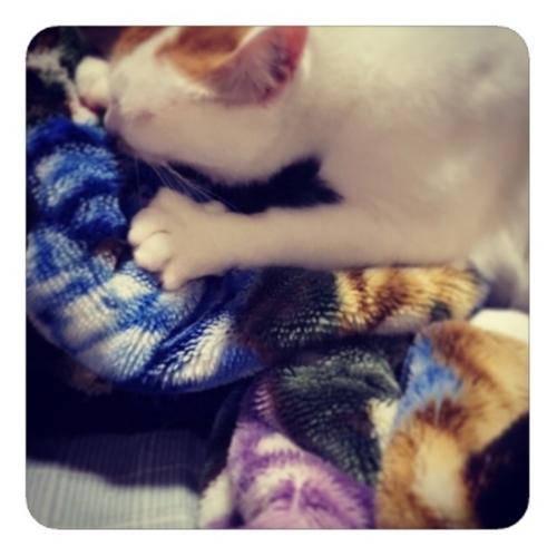 【冷たい毛布】