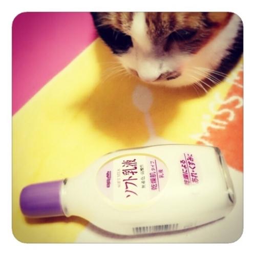 【明色ソフト乳液に猫を添えて】