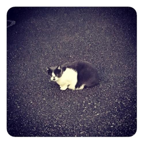 【チャコールグレー×白の猫】