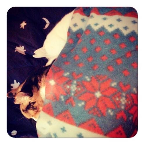 【深夜2時 猫は眠るよ 私の布団で】
