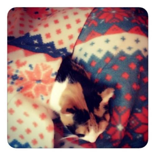 【深夜3時 猫は眠るよ 私の布団で】