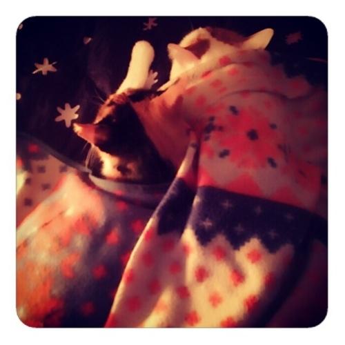 【深夜4時 猫は眠るよ 私の布団で】