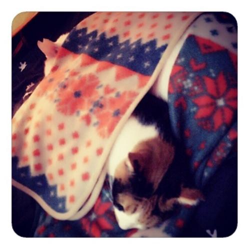 【朝102時 猫は眠るよ 私の布団で】