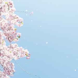 ヒーリング講座なら、奈良の癒しの風ふうみ