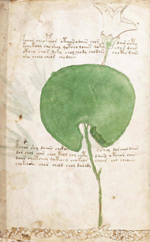 ヴォイニッチ手稿 関西でヒーリングなら、奈良の「癒しの風ふうみ」へ