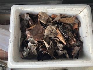 f:id:forest-sparrow:20190102130855j:plain