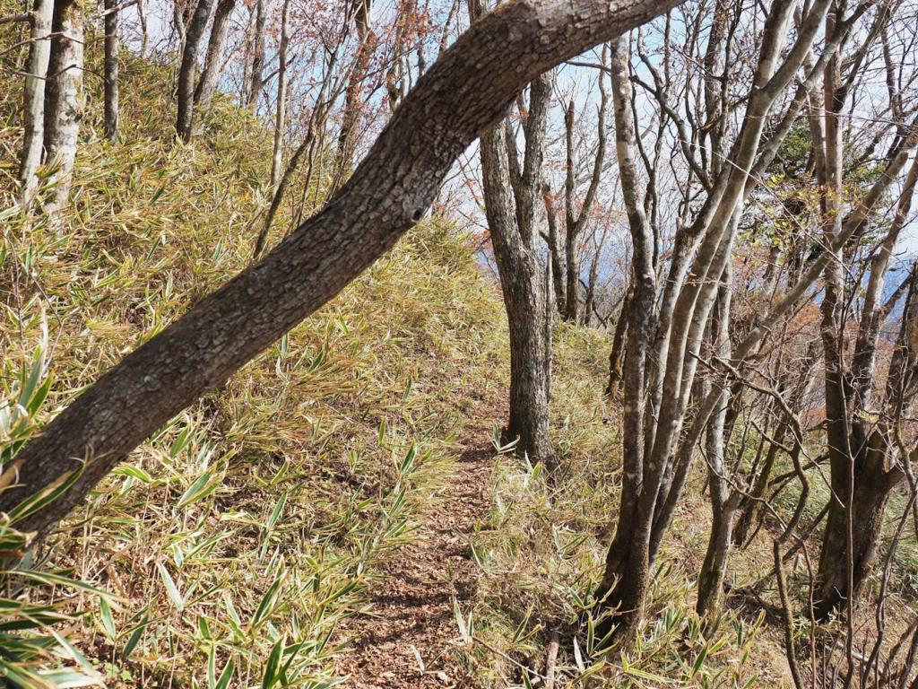 f:id:forestline:20190127153528p:plain