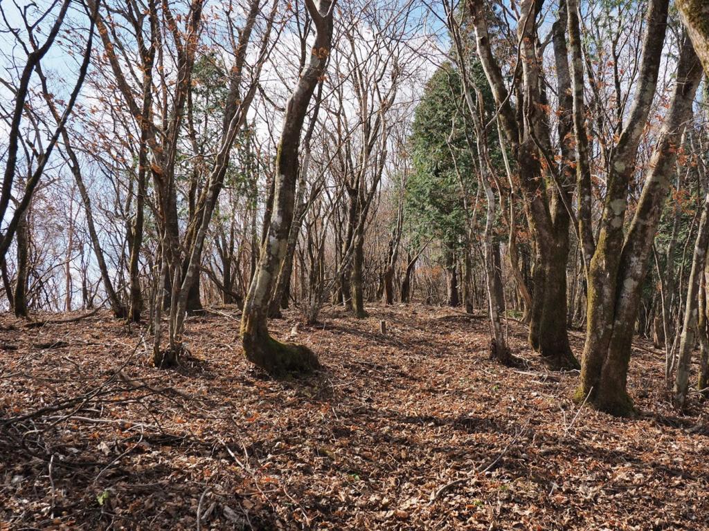 f:id:forestline:20190127153558p:plain