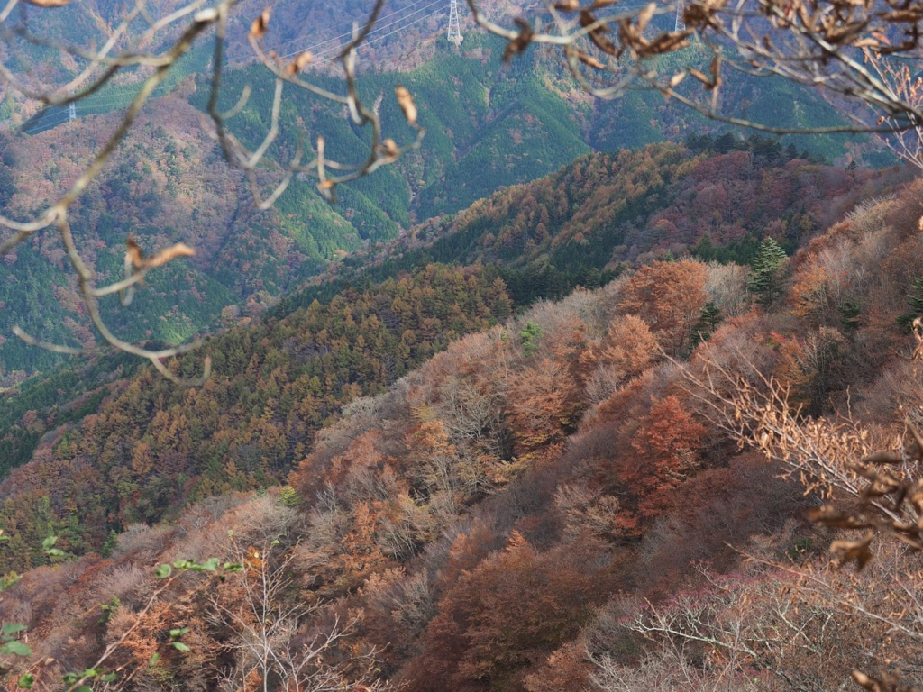 f:id:forestline:20190127153634p:plain