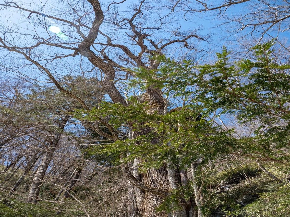 f:id:forestline:20190414210219p:plain