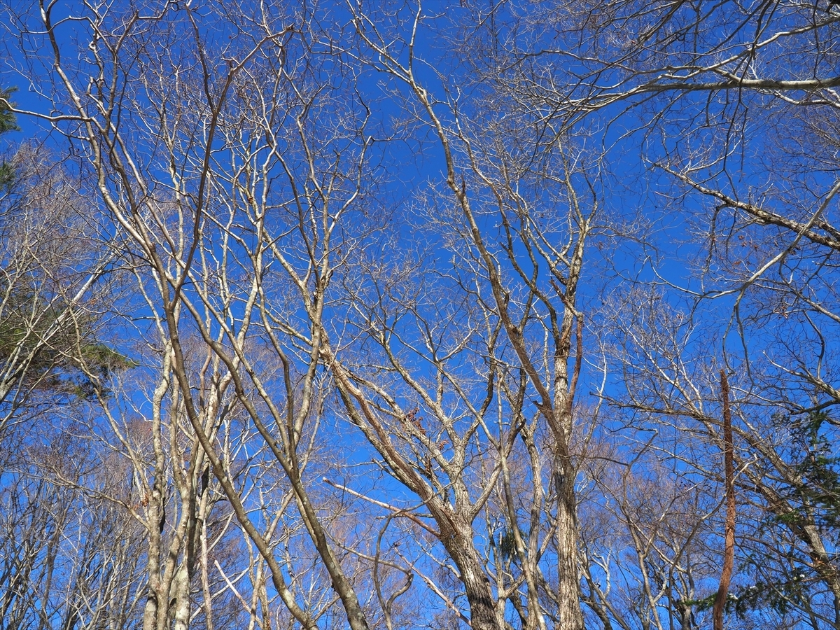 f:id:forestline:20191130133400j:plain