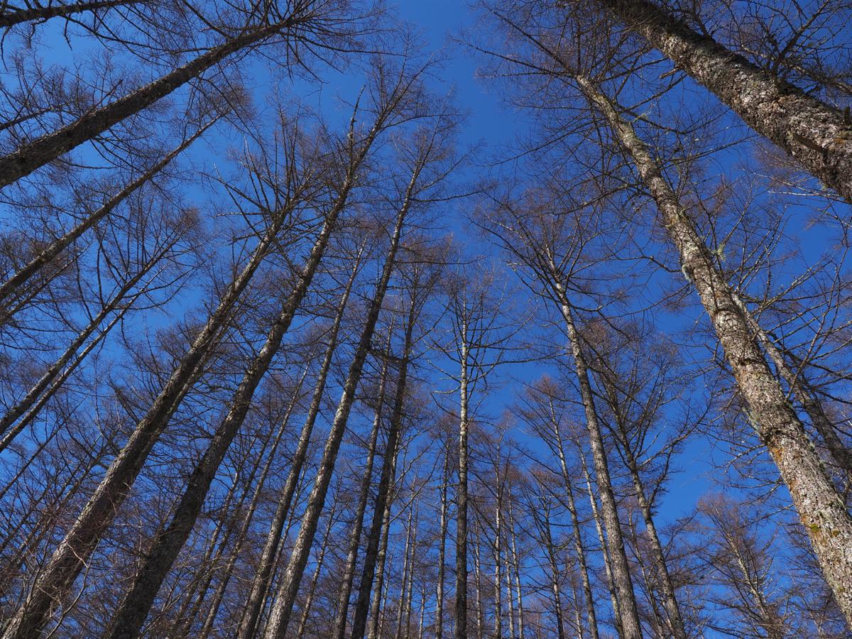 f:id:forestline:20191230103824p:plain
