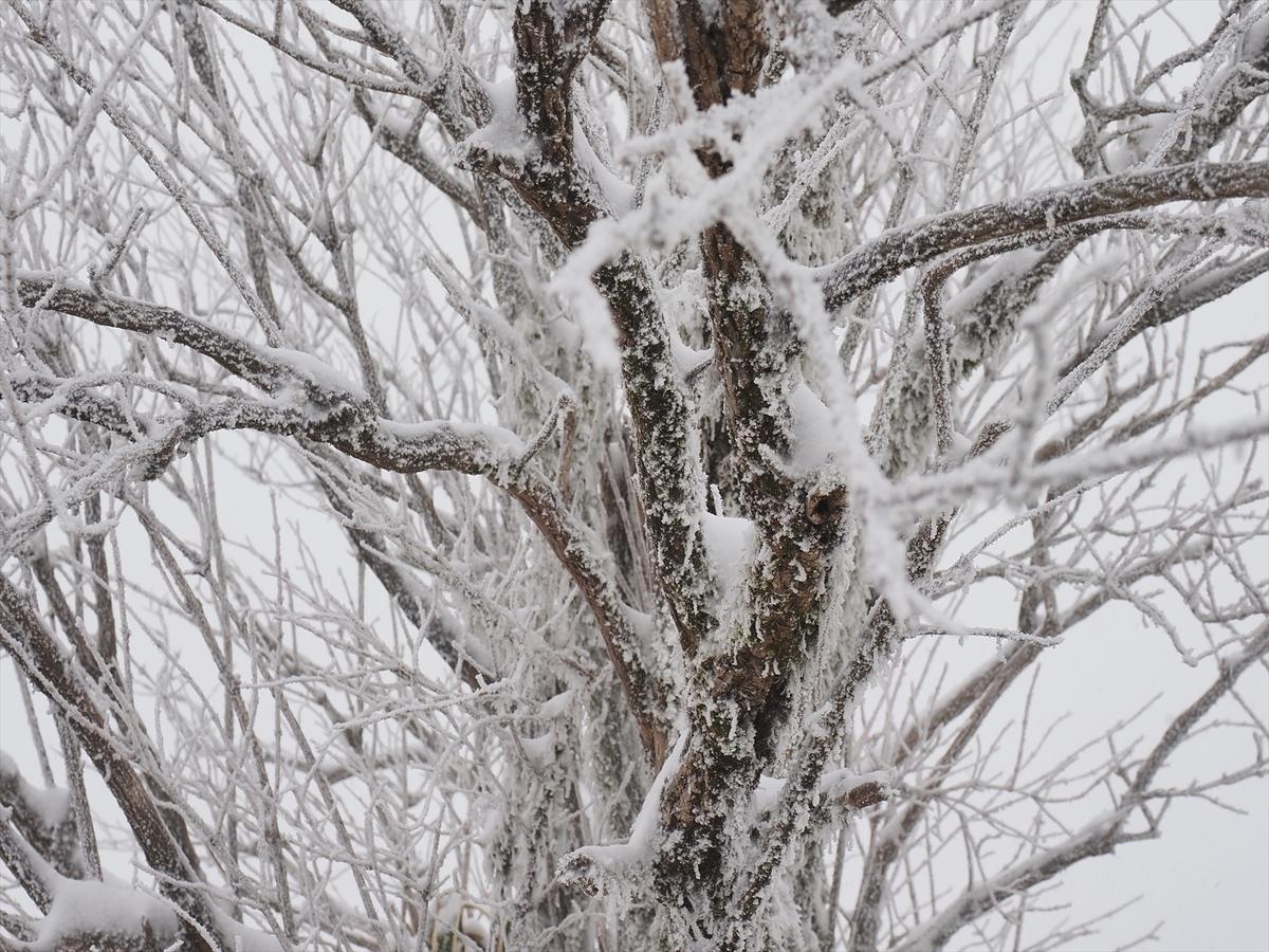 f:id:forestline:20200118093028j:plain